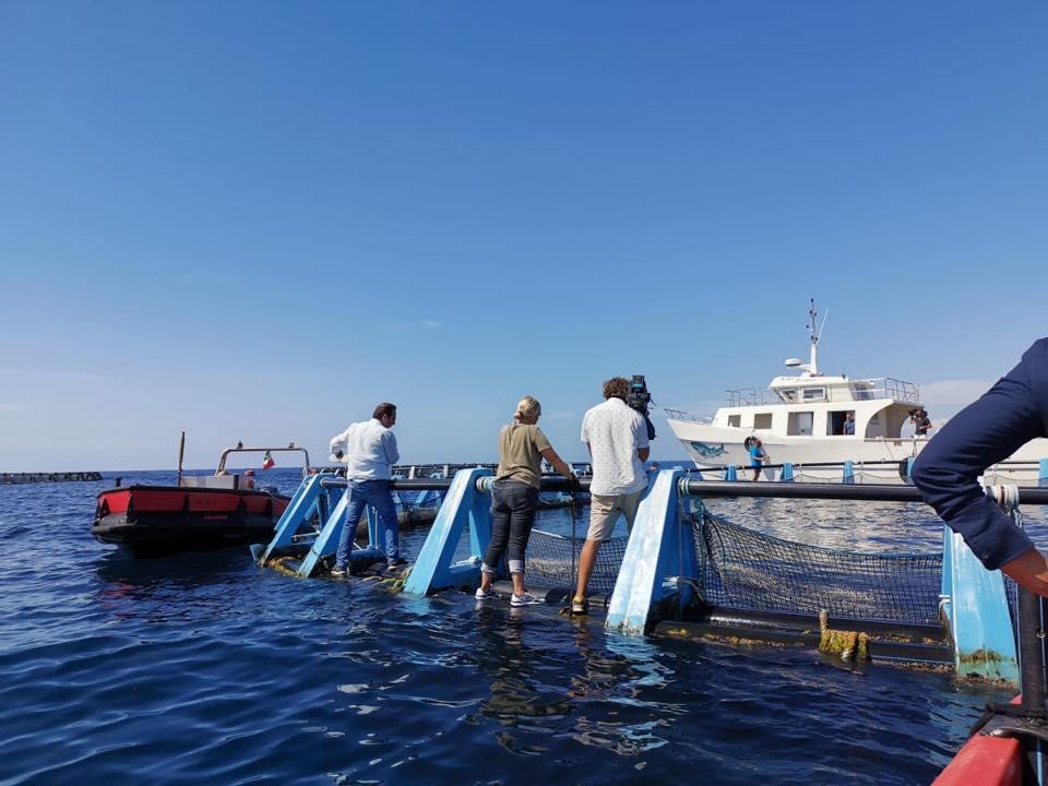 Linea Blu InMare - Alla Palma Azzurra